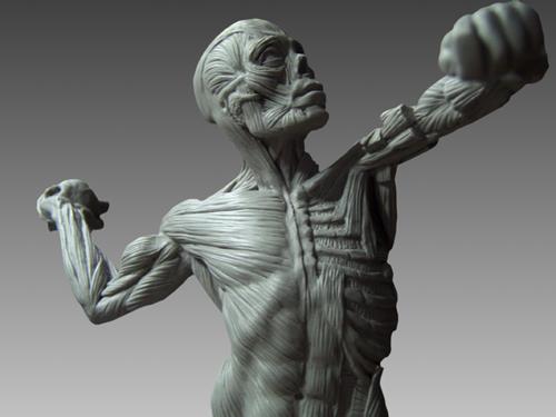 14799 Human Anatomy Ecorche Male Model
