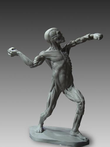 Ecorche Male Anatomical Figure
