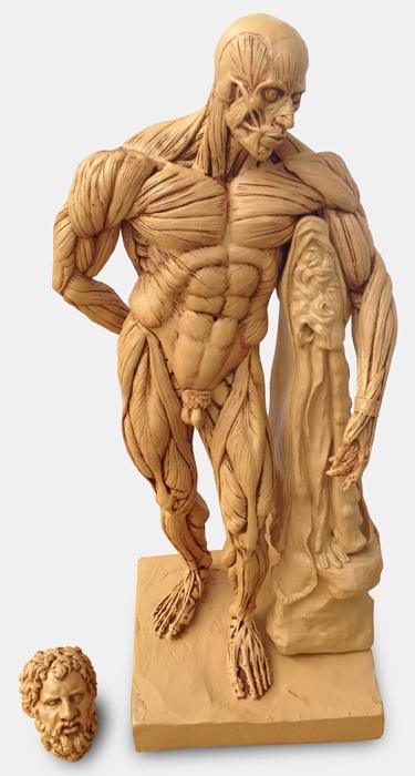 Hercules Ecorche Figure - Beige