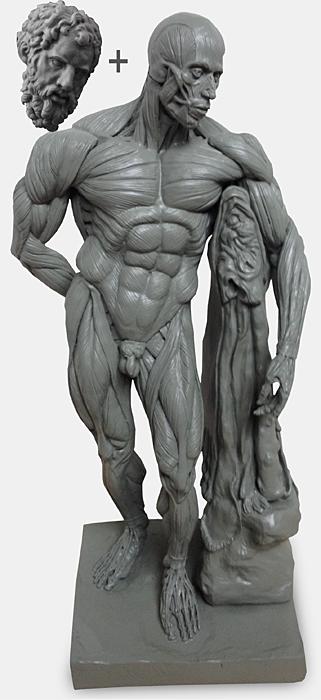 Hercules Ecorche Figure